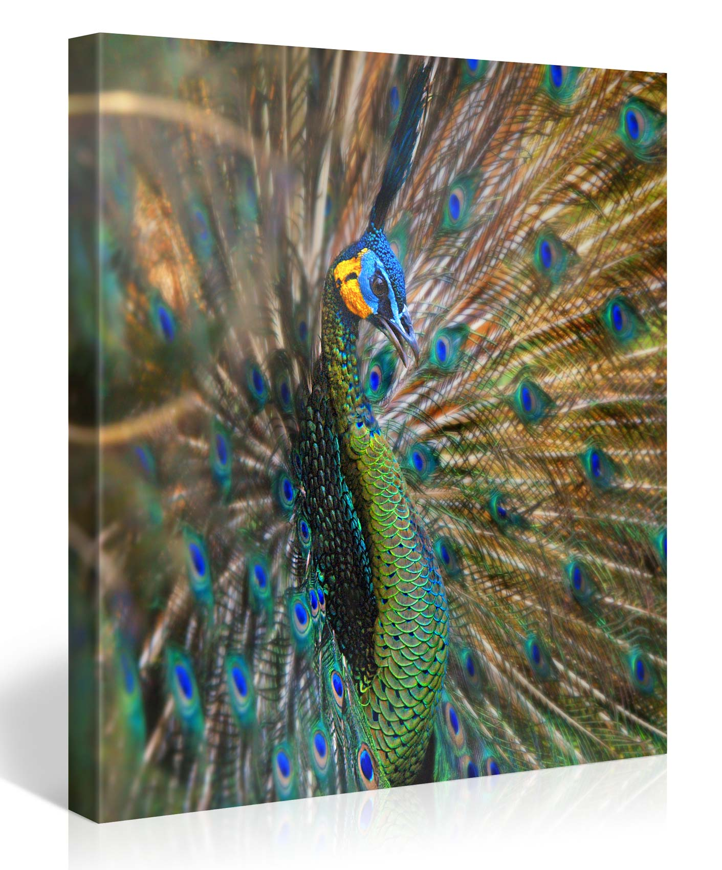 PEACOCK WINGS 2 80x80cm #e4158