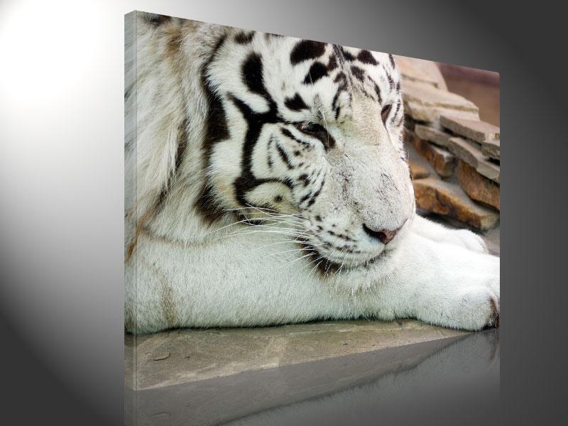 WHITE TIGER 100x75cm - #e3173