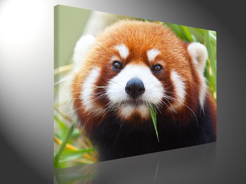 RED PANDA 100x75cm -  #e3286