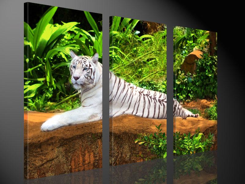 WHITE TIGER 130x80cm - #e3372