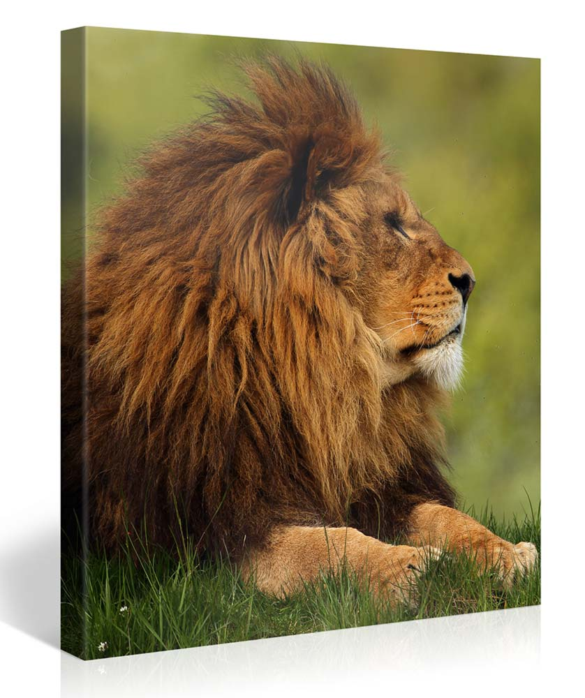 Stretched Canvas Print - OVERLOOKING THE KINGDOM Large Animal Wall Art s3603